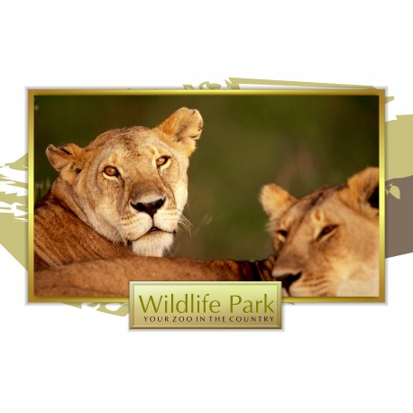 "Zoo Field Trip 24"" x 33"" Poster Template"